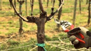Prodotti ed accessori per l'agricoltura ed il florovivaismo.